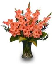 Glorious Gladiolus