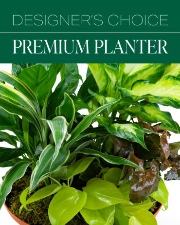 Designer\'s Choice Premium Planter